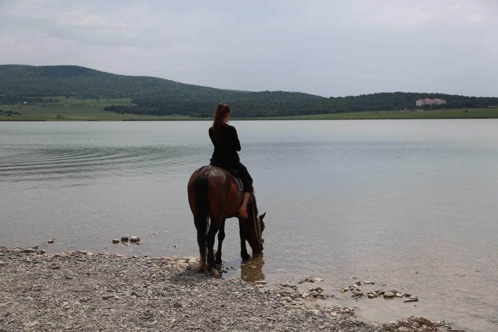 Bazaleti lake horses